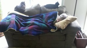 Dad Napping with the kitties.
