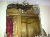 Wet wood and mold under sheetrock.