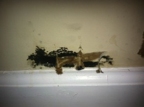 Toxic black mold on living room wall.