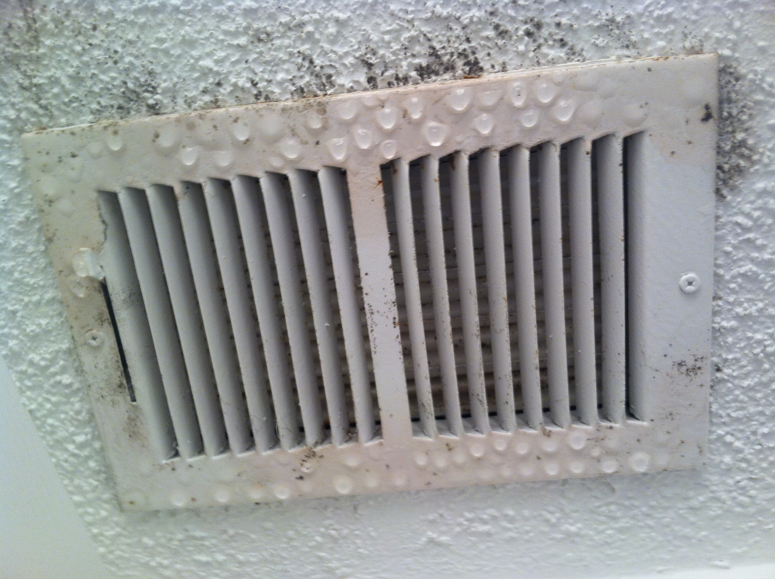 What does black mold look like on ceiling 11
