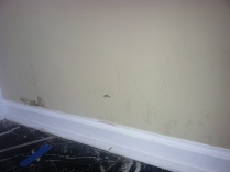 More Toxic Black Mold.